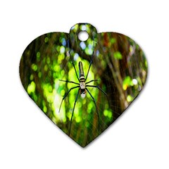 Spider Spiders Web Spider Web Dog Tag Heart (two Sides) by Nexatart
