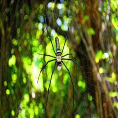 Spider Spiders Web Spider Web Magic Photo Cubes by Nexatart