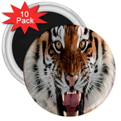 Tiger  3  Magnets (10 Pack)  by Nexatart