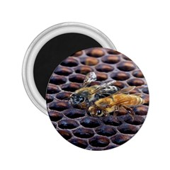 Worker Bees On Honeycomb 2 25  Magnets by Nexatart