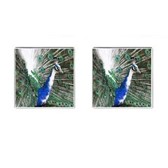 Animal Photography Peacock Bird Cufflinks (square)