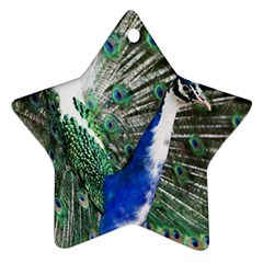 Animal Photography Peacock Bird Star Ornament (two Sides) by Amaryn4rt