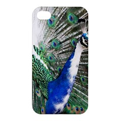 Animal Photography Peacock Bird Apple Iphone 4/4s Hardshell Case