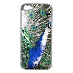 Animal Photography Peacock Bird Apple Iphone 5 Case (silver)