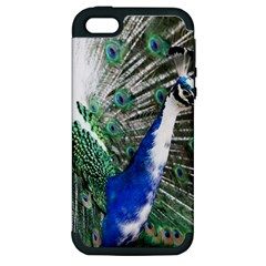 Animal Photography Peacock Bird Apple Iphone 5 Hardshell Case (pc+silicone) by Amaryn4rt