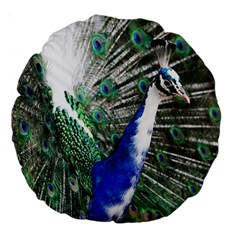 Animal Photography Peacock Bird Large 18  Premium Round Cushions