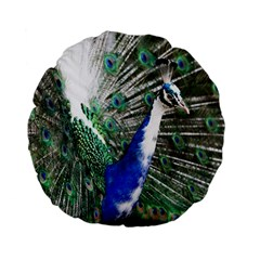Animal Photography Peacock Bird Standard 15  Premium Flano Round Cushions by Amaryn4rt