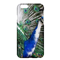 Animal Photography Peacock Bird Apple Iphone 6 Plus/6s Plus Hardshell Case by Amaryn4rt