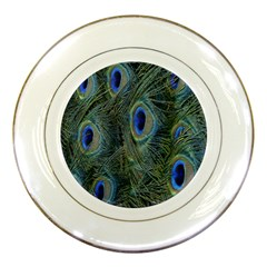 Peacock Feathers Blue Bird Nature Porcelain Plates by Amaryn4rt