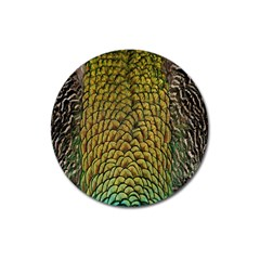 Peacock Bird Feather Gold Blue Brown Magnet 3  (round) by Alisyart