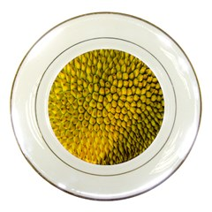 Jack Shell Jack Fruit Close Porcelain Plates by Amaryn4rt