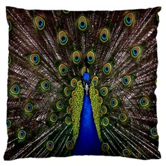 Bird Peacock Display Full Elegant Plumage Large Cushion Case (two Sides) by Amaryn4rt