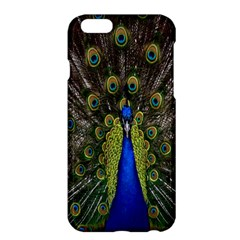 Bird Peacock Display Full Elegant Plumage Apple iPhone 6 Plus/6S Plus Hardshell Case