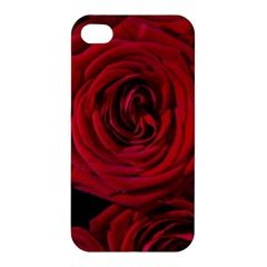 Roses Flowers Red Forest Bloom Apple Iphone 4/4s Hardshell Case by Amaryn4rt