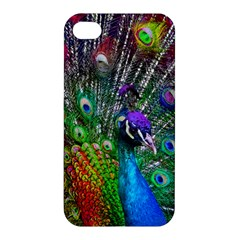 3d Peacock Pattern Apple Iphone 4/4s Premium Hardshell Case by Amaryn4rt