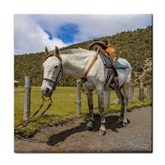 White Horse Tied Up At Cotopaxi National Park Ecuador Tile Coasters by dflcprints