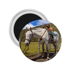 White Horse Tied Up At Cotopaxi National Park Ecuador 2 25  Magnets by dflcprints