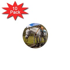 White Horse Tied Up At Cotopaxi National Park Ecuador 1  Mini Magnet (10 Pack)  by dflcprints