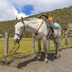 White Horse Tied Up At Cotopaxi National Park Ecuador Magic Photo Cubes by dflcprints
