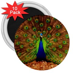 3d Peacock Bird 3  Magnets (10 Pack)