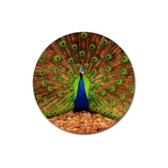 3d Peacock Bird Magnet 3  (round) by Amaryn4rt