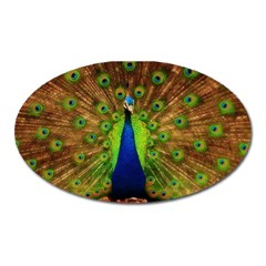 3d Peacock Bird Oval Magnet by Amaryn4rt