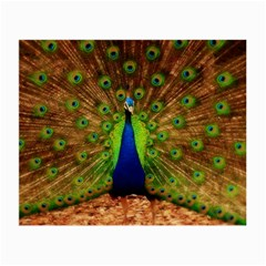 3d Peacock Bird Small Glasses Cloth (2 Side) by Amaryn4rt