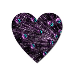 Bird Color Purple Passion Peacock Beautiful Heart Magnet