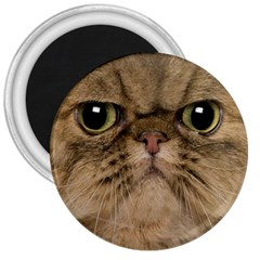 Cute Persian Cat Face In Closeup 3  Magnets by Amaryn4rt