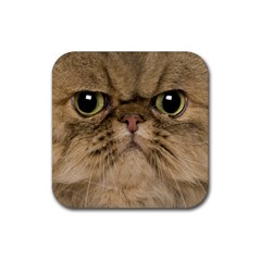 Cute Persian Cat Face In Closeup Rubber Square Coaster (4 Pack)  by Amaryn4rt