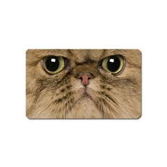 Cute Persian Cat Face In Closeup Magnet (name Card) by Amaryn4rt
