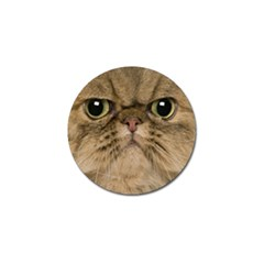 Cute Persian Cat Face In Closeup Golf Ball Marker (4 Pack) by Amaryn4rt