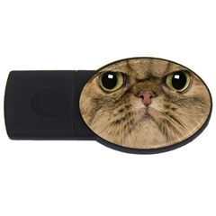 Cute Persian Cat Face In Closeup Usb Flash Drive Oval (2 Gb) by Amaryn4rt