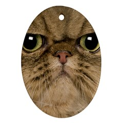 Cute Persian Cat Face In Closeup Oval Ornament (two Sides) by Amaryn4rt