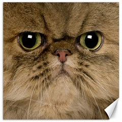 Cute Persian Cat Face In Closeup Canvas 16  X 16   by Amaryn4rt