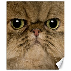 Cute Persian Cat Face In Closeup Canvas 20  X 24   by Amaryn4rt