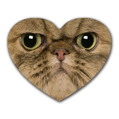 Cute Persian Cat Face In Closeup Heart Mousepads by Amaryn4rt