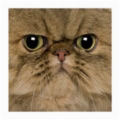 Cute Persian Cat Face In Closeup Medium Glasses Cloth (2 Side) by Amaryn4rt