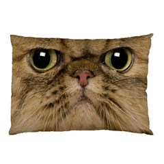 Cute Persian Cat Face In Closeup Pillow Case (two Sides) by Amaryn4rt