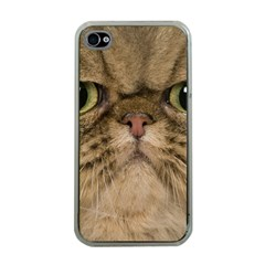 Cute Persian Cat Face In Closeup Apple Iphone 4 Case (clear) by Amaryn4rt