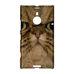 Cute Persian Cat Face In Closeup Nokia Lumia 1520 by Amaryn4rt
