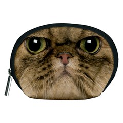 Cute Persian Cat Face In Closeup Accessory Pouches (medium)  by Amaryn4rt