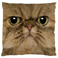 Cute Persian Cat Face In Closeup Large Flano Cushion Case (one Side) by Amaryn4rt