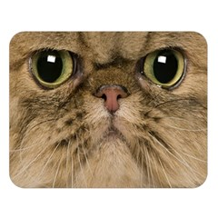 Cute Persian Cat Face In Closeup Double Sided Flano Blanket (large)  by Amaryn4rt