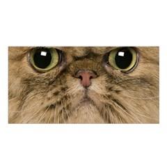 Cute Persian Cat Face In Closeup Satin Shawl by Amaryn4rt