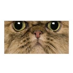Cute Persian Cat Face In Closeup Satin Wrap by Amaryn4rt