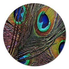 Peacock Feathers Magnet 5  (round) by Simbadda