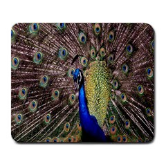 Multi Colored Peacock Large Mousepads by Simbadda