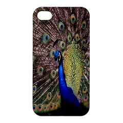 Multi Colored Peacock Apple Iphone 4/4s Premium Hardshell Case by Simbadda