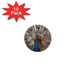 Indian Peacock Plumage 1  Mini Magnet (10 Pack)  by Simbadda